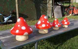 Riproduzione funghi