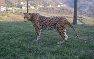 Replica di leopardo per vetrina boutique Ermanno Scervino