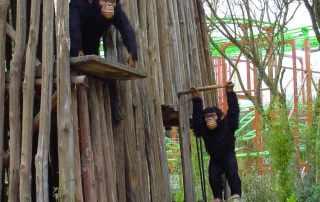scimmiette animatroniche